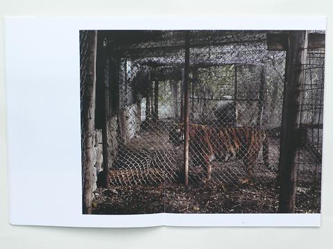 Charlotte Dumas: Tiger Tiger (spread) / © Gabriele Franziska Götz