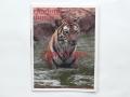 Charlotte Dumas: Tiger Tiger (cover) / © Gabriele Götz